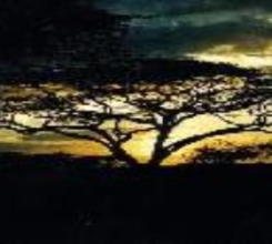 Serengeti Serenade
